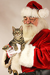 Santa Claus holding a kitten with a mouse toy for a gift