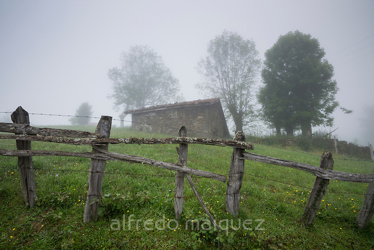 Fence of a meadow in morning fog, Peloño Forest, Ponga, Asturias, Spain