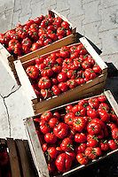 Tomatoes for sale by the road side, near Palermo, Sicily, Italy