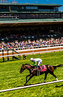 Jockey Miguel Mena, Horse racing on the turf course at Keeneland Racecourse, Lexington, Kentucky USA.