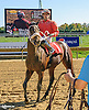 Temple Fairy Place winning at Delaware Park on 10/15/16