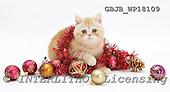 Kim, CHRISTMAS ANIMALS, photos, GBJBWP18109,#XA# stickers