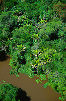 Aerial of river in floodplain rainforest in MarajÄ Island, Amazon estuary, Brazil; palm in foreground is Manicaria saccifera..