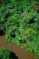 Aerial of river in floodplain rainforest in MarajÄ Island, Amazon estuary, Brazil; palm in foreground is Manicaria saccifera..