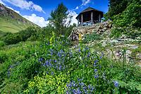 France, Hautes-Alpes (05), Villar-d'Arène, jardin alpin du Lautaret, le kiosque