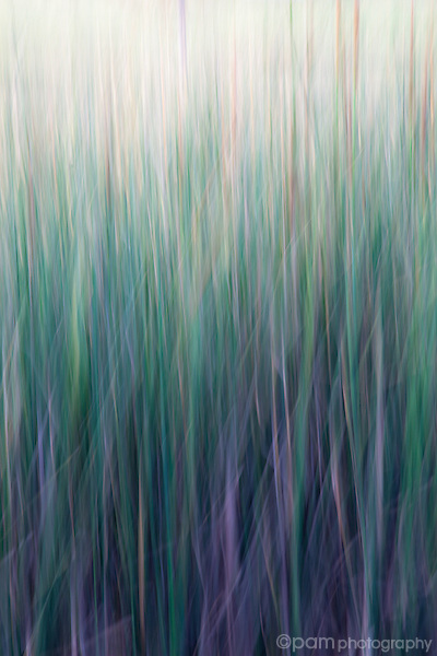 Abstract of cattails and tall grass