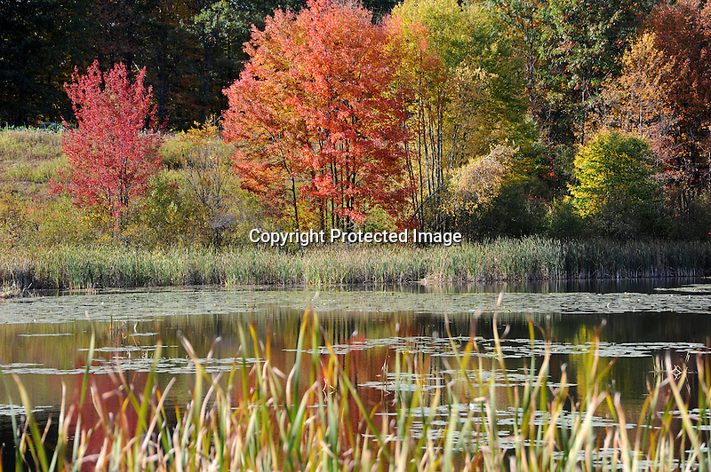 Pond and Colorful Foliage during Fall Season in Rural Walpole, New Hampshire USA