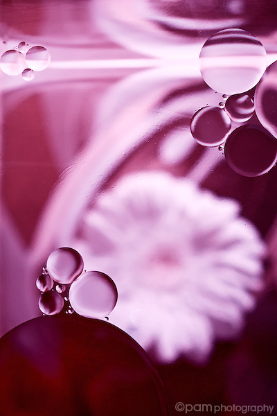 Abstract of circles and flower.  Taken with infrared