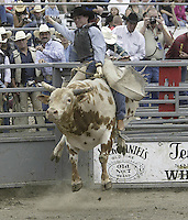 29 August, 2004:  Bull Rider J C Bean rides the bull Hippity Hop during the PRCA 2004 Extreme Bulls competition in Bremerton, WA.