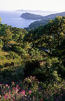 Europe/Provence-Alpes-Côte d'Azur/83/Var/Rayol-Canadel-sur-Mer: Vue sur la corniche des Maures et les Iles d'Hyères depuis le col du Canadel
