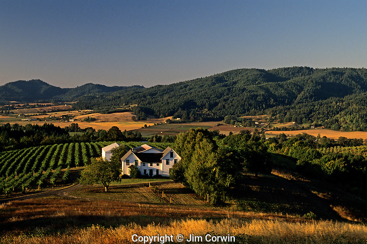 Laurel Ridge Winery Washington County sunrise near Forest Grove Oregon State USA