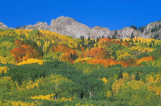 Autumn, The Duke, Kebler Pass near Crested Butte, Colorado