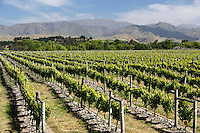 New Zealand, South Island, Marlborough Region, Renwick near Blenheim: Vineyards | Neuseeland, Suedinsel, Marlborough Region, Renwick bei Blenheim: Weinberge