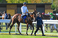 Winner of The Radcliffe & Co EBF Novice Stakes Div 2 Clara Peters ridden by Jason Watson and trained by Gary Moore is led into the Winners Enclosure during Afternoon Racing at Salisbury Racecourse on 3rd October 2018