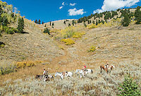 Outdoor Life Editor Andrew McKean, Mike Stock, and guide Greg Kriese with Trefren Outfitters return to camp after hunting mule deer on Greyback Ridge in the Hoeback Drainage of Wyoming Region H, outside of Alpine, Wyoming, September 23, 2015.<br /> <br /> Photo by Matt Nager