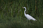 Birdwatching in the Yolo Bypass Wildlife Area in Davis, Ca., on Sunday, May 11, 2014.<br /> Photo by Cathleen Allison