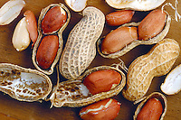 FOOD<br /> Peanuts<br /> Aflatoxins, a group of secondary mycotoxins are reported to naturally occur in peanuts, cottonseed meal, corn etc. the presence of mold does not always indicate presence of the toxin.