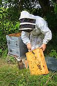 Christelle Appaganou (apicultrice à Bourail) nettoyant le couvre cadres de la ruche