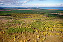 Extensive area of beetle-killed Scots Pine, Pinus sylvestris, within the 10-km Exclusion Zone, south of the Chernobyl Nuclear Power Plant. This image was shot from a Ukrainian government helicopter during a survey of the Chernobyl Exclusion Zone in October, 2012.