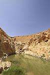 Israel, Negev, Ein Um Salah, a spring in Nahal Marzeva