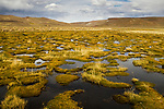 Bofedal wetland, Abra Granada, Andes, northwestern Argentina