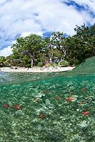 Split level view of Estate Zootenvaal<br /> with pincushion starfish<br /> St. John<br /> U.S. Virgin Islands