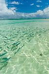 Fish feeding time at resort in Rarotonga, Cook Islands