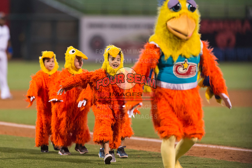 The San Diego Chicken, also known as the Famous Chicken or just The Chicken, leads his chiclets onto the field between innings of the Fall Stars game at Surprise Stadium on November 3, 2018 in Surprise, Arizona. The AFL West defeated the AFL East 7-6 . (Zachary Lucy/Four Seam Images)