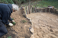 Anlage eines Sanddariums im Garten, Schritt 5: an den Rand des Sandariums werden erste insektenfreundliche Pflanzen gesetzt, eingepflanzt. Sandarium, Sand, Sandfläche, Sandhaufen im Garten, Naturgarten, Nisthilfe für Wildbienen und solitäre Wespen, Lebensraum für Eidechsen, Eidechse. Soll verschiedenen Insekten als Unterschlupf, Nistplatz, und Nahrungsquelle dienen. Mehr als die Hälfte der Wildbienenarten, welche Nester bauen, nisten im Erdboden. Wildbienen-Nisthilfen, Wildbienen-Nisthilfe selbermachen, selber machen, Wildbienenhotel, Insektenhotel, Wildbienen-Hotel, Insekten-Hotel