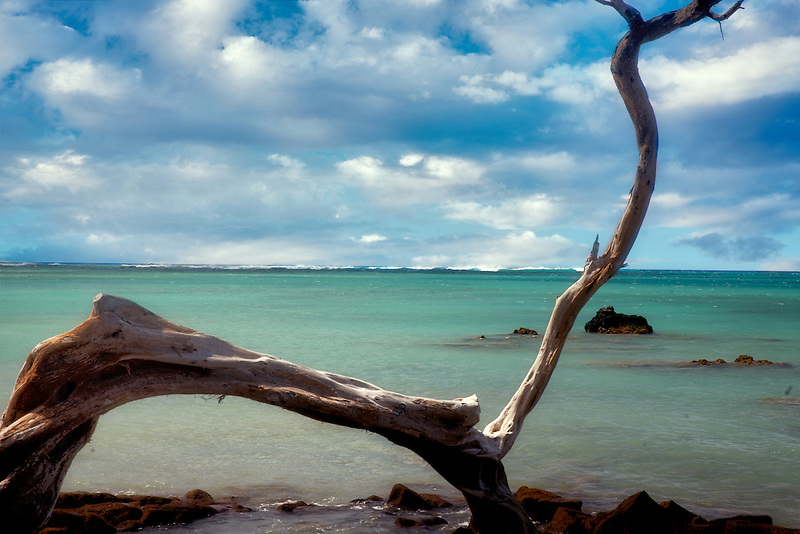 Tree branch and ocean. Hawaii Island.