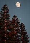 The moon rises just before sunset at Caples Lake near Kirkwood, Ca., on Tuesday, Aug. 28, 2012. .Photo by Cathleen Allison