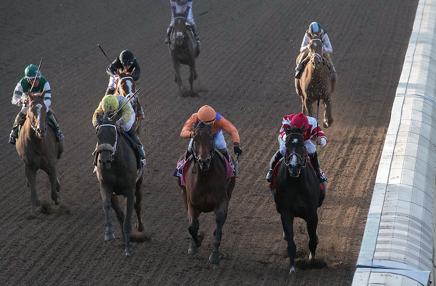 ARCADIA, CA - NOV 04: Beholder #8 (C), ridden by Gary Stevens, wins the the Breeders' Cup Longines Distaff at Santa Anita Park on November 4, 2016 in Arcadia, California. (Photo by Eric Patterson/Eclipse Sportswire/Breeders Cup)