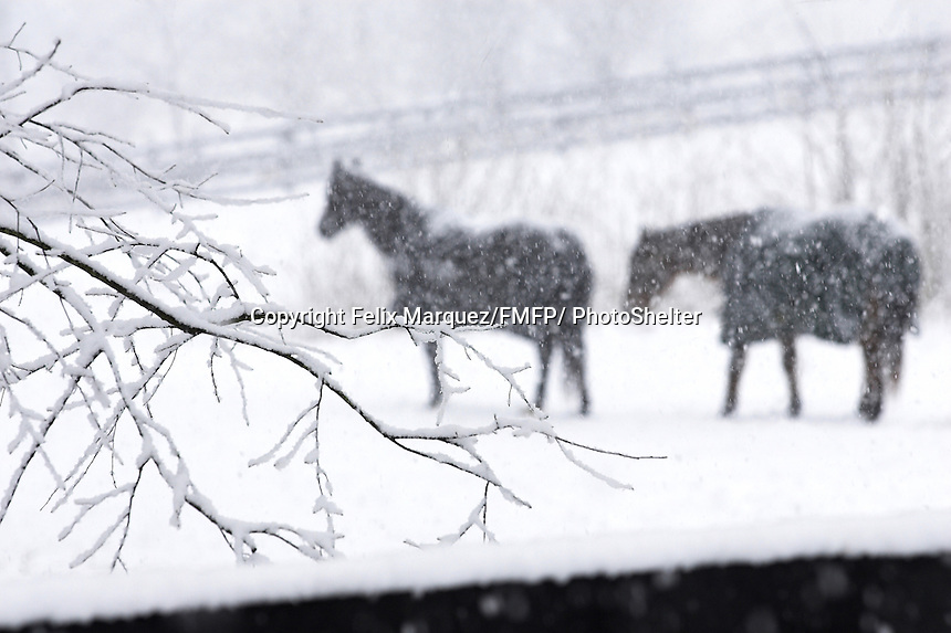 A late winter snow fall surprises Leesburg area residents and creates picture perfect landscapes.