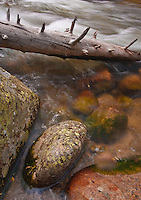 Small boulders and deadfall tree trunks create an interesting still life in Glacial Creek in Rocky Mountain National Park, Colorado