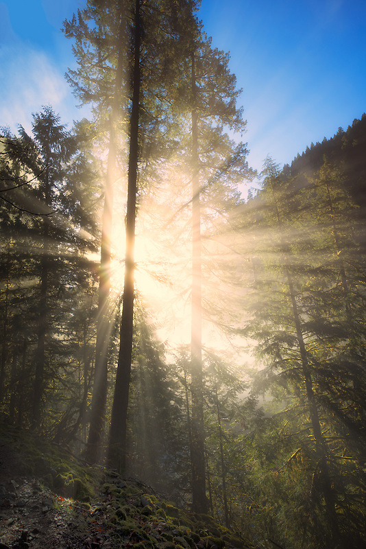 Sun rays through fog. Eagle Creek, Oregon