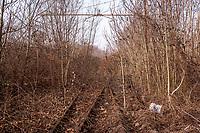 Milano, periferia nord. Ex scalo merci ferroviario Farini. Rotaie, binari in disuso dispersi nella vegetazione --- Milan, north periphery. Rail yard Farini. Abandoned tracks lost in the vegetation