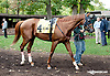 Cerro before The Barbaro Stakes at Delaware Park on 10/9/13