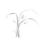 Beautiful delicate floral design of Oriental Zen ink painting artwork. Wild orchids, flowers and leaves. Asian style illustration on white background.