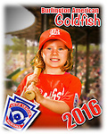 2016 Burlington American Goldfish