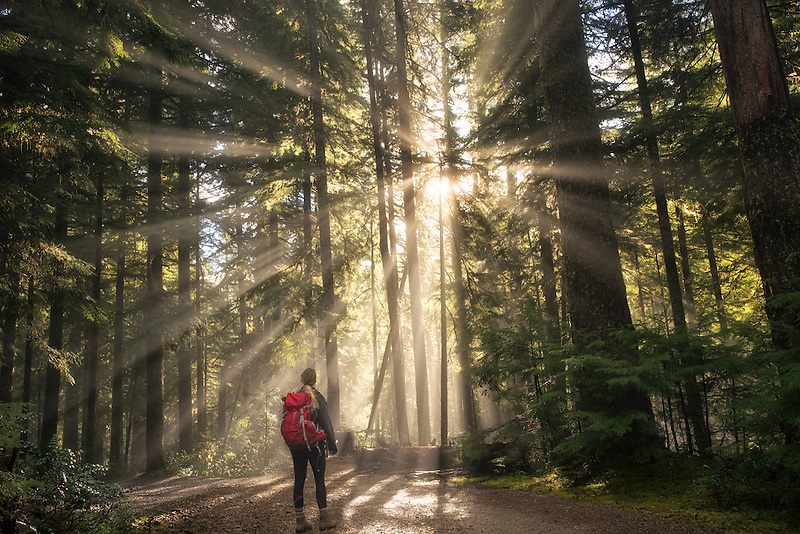Road/trail and hiker along Opal Creek with sunburst/godrays. Opal Creek Wilderness, Oregon
