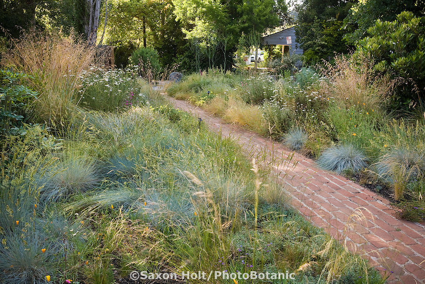 Brick path through California native plant front yard, lawn substitute garden using native grasses (Festucas, Deschampsia)