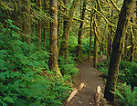 Wallace Falls State Park, WA <br /> The Woody Trail leading thru the mossy cedar/fir forest understory along the Wallace River