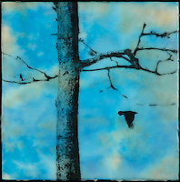 Photography of tree branch  and bird with brilliant blue sky encaustic painting. SOLD