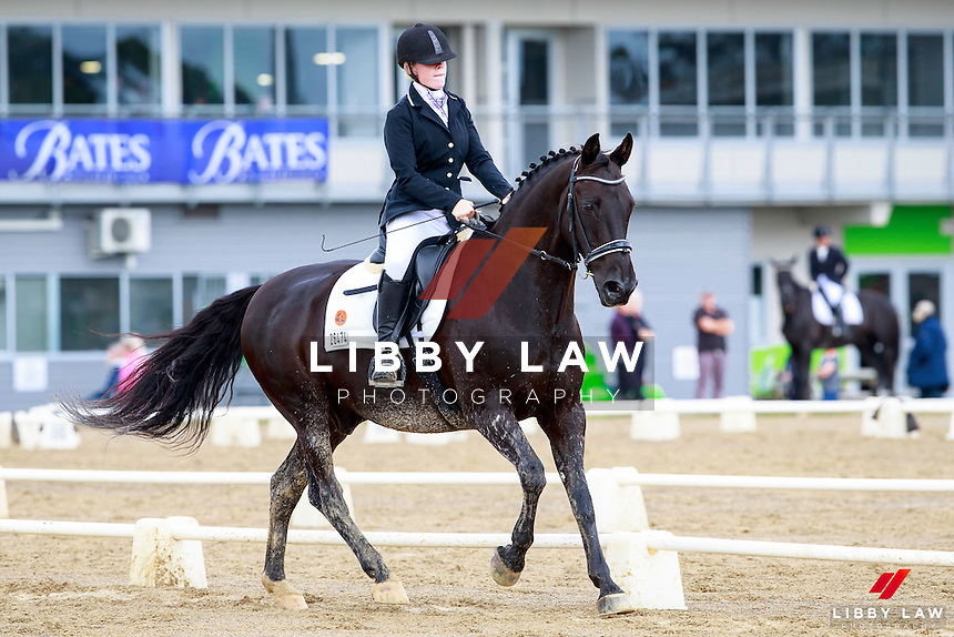NZL-Chontelle Honour rides Tama Park Bradman. 2017 NZL-Bates NZ Dressage Championships. Manfeild Park, Feilding. Friday 3 February. Copyright Photo: Libby Law Photography