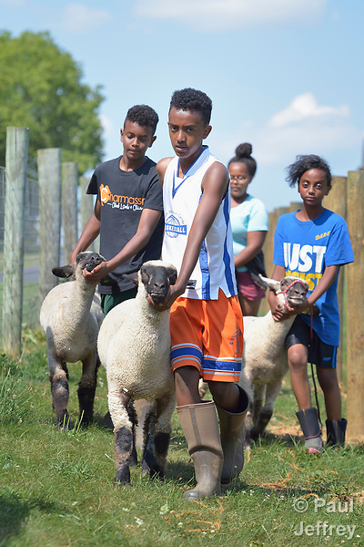 Mulugeta Kiflom, a 13-year old resettled refugee from Ethiopia, leads a group of youth learning how to show sheep and goats in Linville, Virginia, on July 17, 2017. The youth are preparing to show their animals in a county fair. <br /> <br /> Kiflom and other refugees were resettled in the Harrisonburg, Virginia, area by Church World Service. <br /> <br /> Photo by Paul Jeffrey for Church World Service.