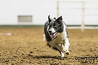 2017 Minnesota State Fair Stock Dog Trials