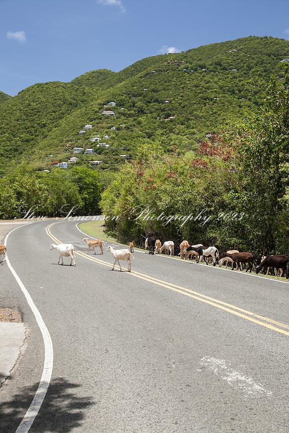 Coral Bay<br /> St. John<br /> U.S. Virgin Islands