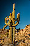 The Embrace #2, near Hualapai Mountains, Arizona