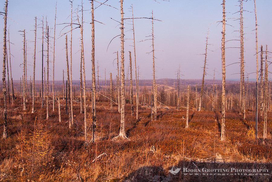 Russia, Sakhalin, Nogliki. Burnt out trees at the coast north of Nogliki.