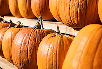 Pumkins on display at a farmers market.